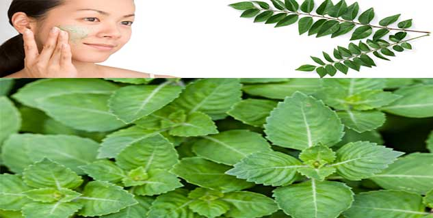 basil and curry leaves in hindi